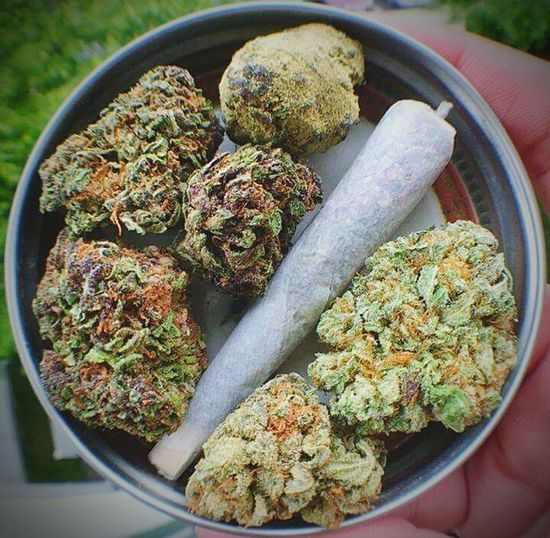 Weed Tin Spliff Joint Moonrock Kief Dipped  Grass Green 420 Thc Skunk Organic Outdoor Greenhouse Meds Pain Killer Kush Natural Herb Nature's Gift Anti Inflammatory Munchies Pot