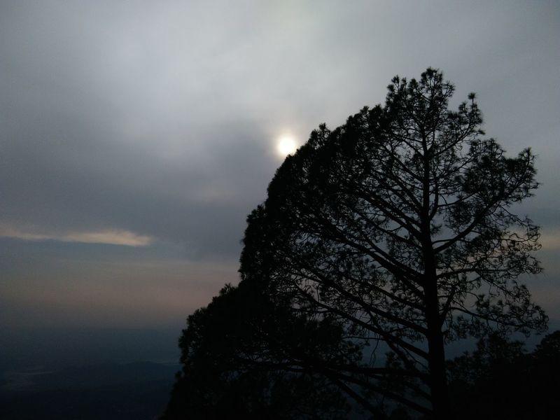 Enjoying Life Landscape Nature Tree Mountain Original Experiences Feel The Journey Things I Like Sun Behind Trees Woods Blue Sky Katra Jammu India