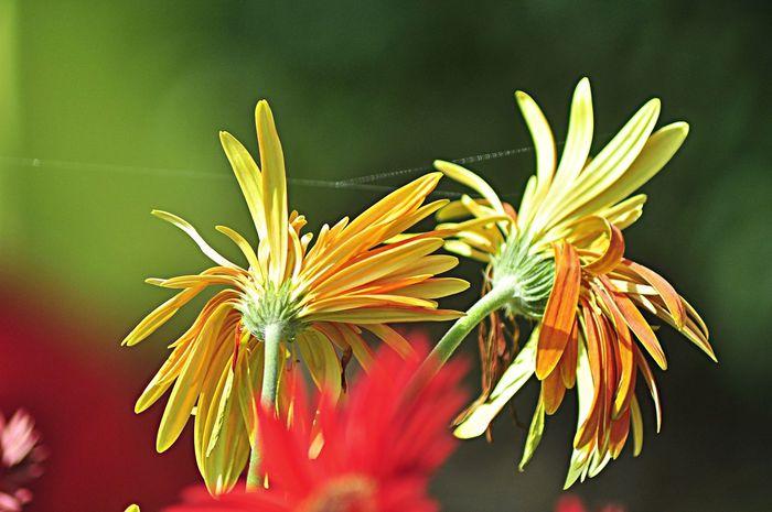 Floria Putrajaya 2014 Flowers