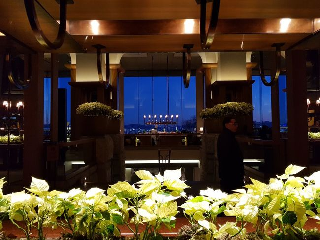 hotel view Korea Photos Hotel Lobby View Flower Night Plant Illuminated Arts Culture And Entertainment Indoors  No People Freshness Fragility Growth Indoors  Retail