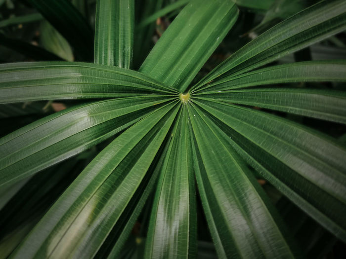 Leaf Plant Part Growth Green Color Plant Close-up Beauty In Nature No People Nature Pattern Full Frame Day Natural Pattern Backgrounds Focus On Foreground Freshness Outdoors Selective Focus High Angle View Tranquility Palm Leaf
