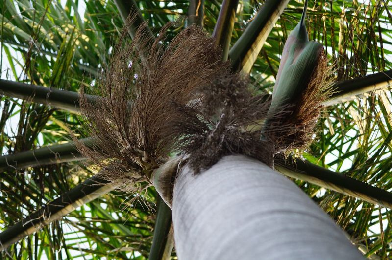 #palmtree Close-up Day Nature Outdoors Tree