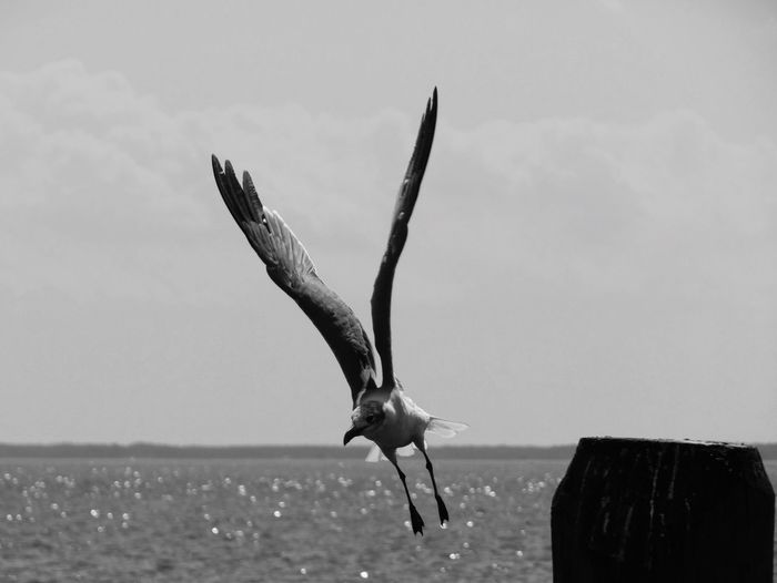 Sea Sky Animal Themes Nature Bird Real People Horizon Over Water Spread Wings Flying Water Animals In The Wild Outdoors Scenics One Animal Day One Person Beauty In Nature Beach Low Section Sea Gull