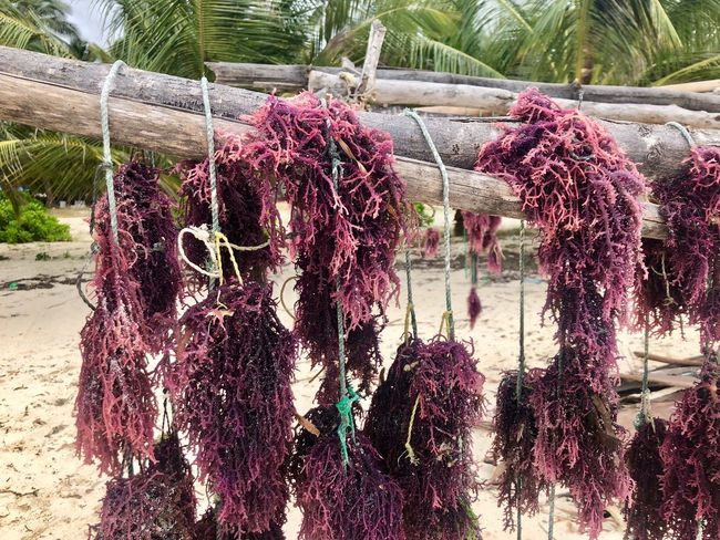 Algae Hanging Plant Tree Nature No People Day Outdoors Drying