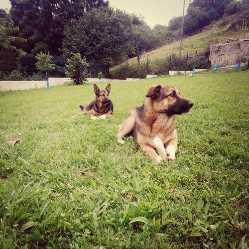 mis pequeñas fieras!! ♥ My Dogs Cute Pets Pastores Alemanes