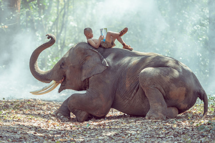 Students in rural Thailand Reading books with elephants,Surin,Thailand. Modern Workplace Culture Adult Adults Only Animal Animal Themes Animal Trunk Day Domestic Animals Elephant Fun Indian Elephant Mammal Nature One Animal One Man Only One Person Only Men Outdoors People Young Adult