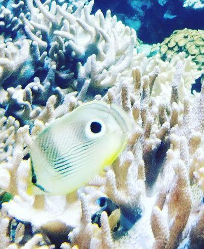 Sea Life!! Underwater UnderSea Sea Life Coral Fish Nature Sea Water Sea Anemone
