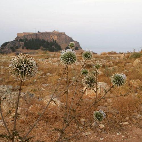 2 mila (e passa) anni e non sentirli Acropoli Lindos Rodi Grecia Vegetazione Paesaggio Arido Rovine