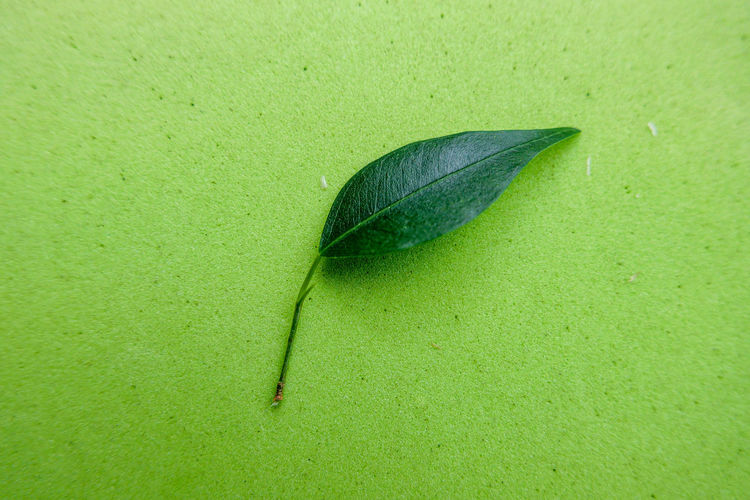 High angle view of green leaf in water