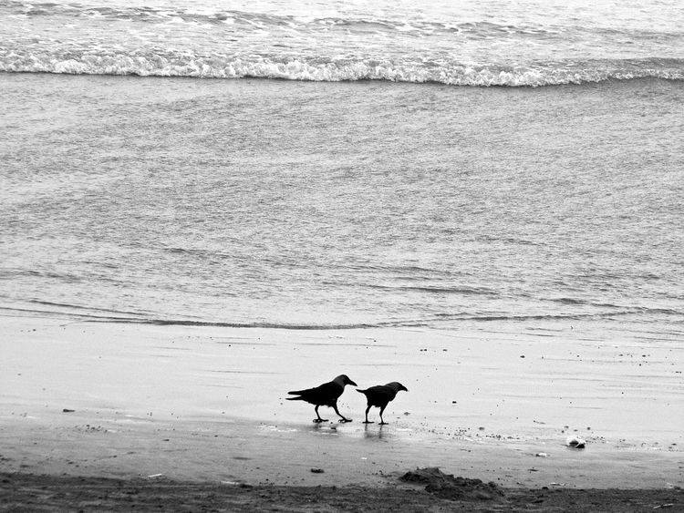 Birds on Beach Beach Beach Life Beach Photography Beachphotography Carefree Coastline Day Desert Escapism FootPrint Getting Away From It All Horizon Over Water Outdoors Relaxation Sand Sand Dune Sea Shore Summer Togetherness Vacations Water Wave