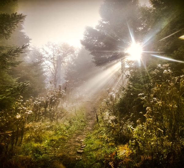 Idyllic Sceneries Sunbeam Through The Trees Sunbeam Lens Flare Nature Tree Sun Growth EyeEmNewHere Sunlight Beauty In Nature Tranquility Tranquil Scene No People Outdoors Scenics Day Forest Grass Sky Plant