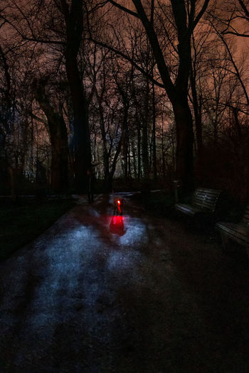 Car on road amidst trees at night