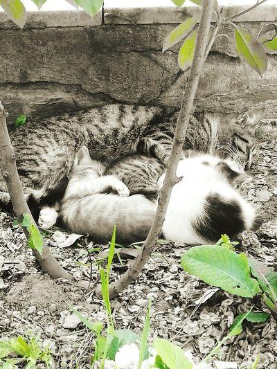 Bakın Burada Ne Var Kediler Anne Ve Yavruları Mışıl Mışıl Uyuyorlar I Love Cats çanakkale Siyah&beyaz