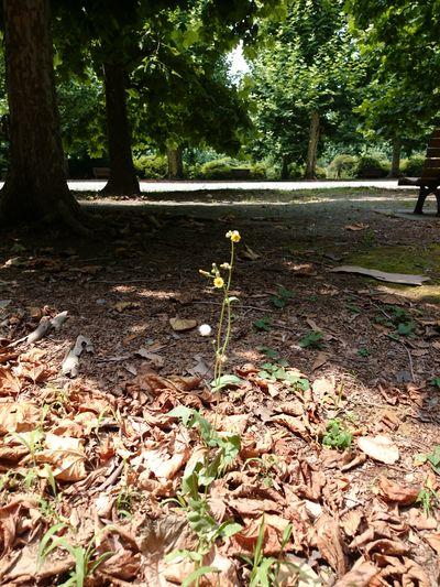 Green Flower Sunny Day Shinjuku-gyoen Tokyo,Japan Tree Leaf Sunlight Leaves Woods Sunrays Branch