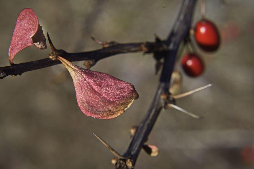 Nature D5500 Macro Berry