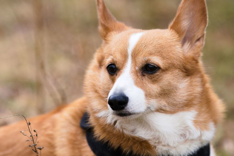 Close-up portrait of a dog looking away