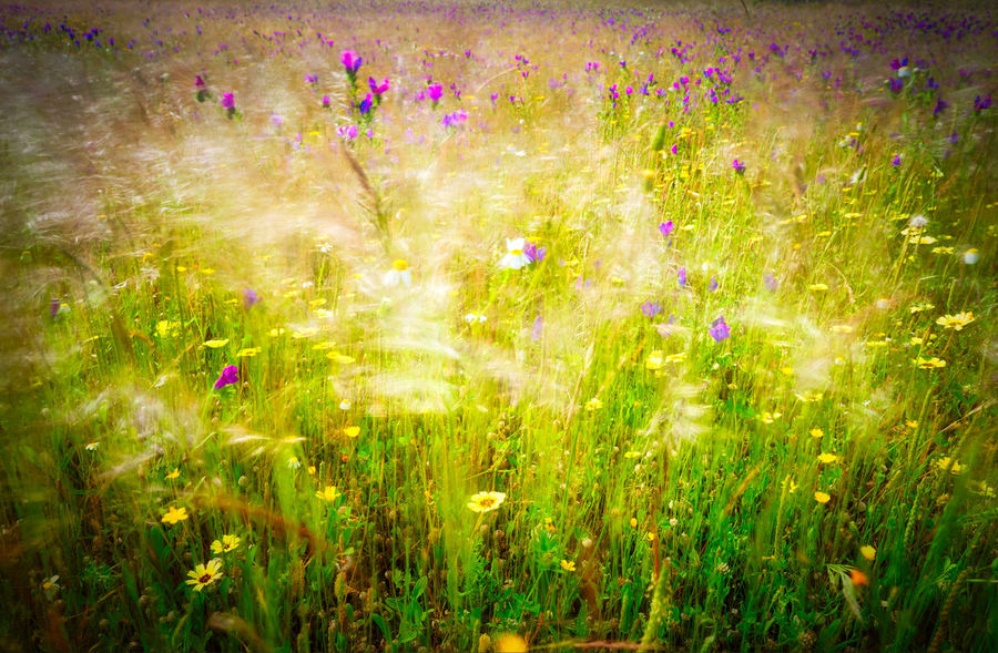 Wildflower Botany Plant Life In Bloom Blooming Flowering Plant Focus