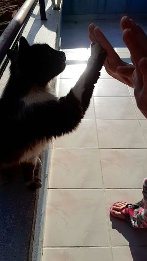 Tuxedocat Cat Smart Highfive Love