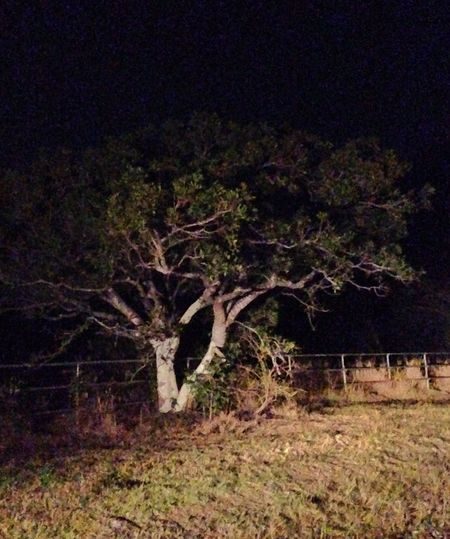 Tree Night View IPhone Spooky