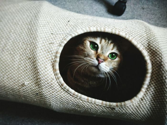 High angle view of cat relaxing in pet bed at home