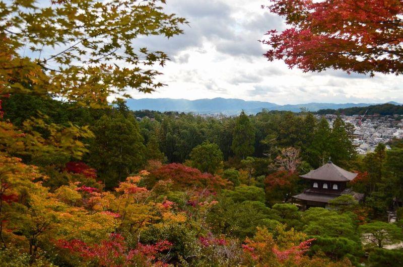 My autumn in ginkakuji first eyeem photo