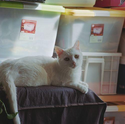 桶桶 Mamiya C330 120 Film Kodakportra400 Cat