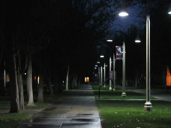 Night Tree