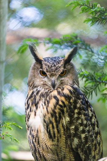 Close-up portrait of owl perching on branch