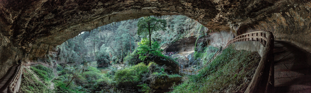 The Cliff Cliff EyeEm Best Shots EyeEmNewHere Forest Panoramic Panoramic Photography Pounds Taiwan Travel Destinations Tree