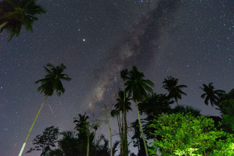 Low angle view of palm trees against sky at night