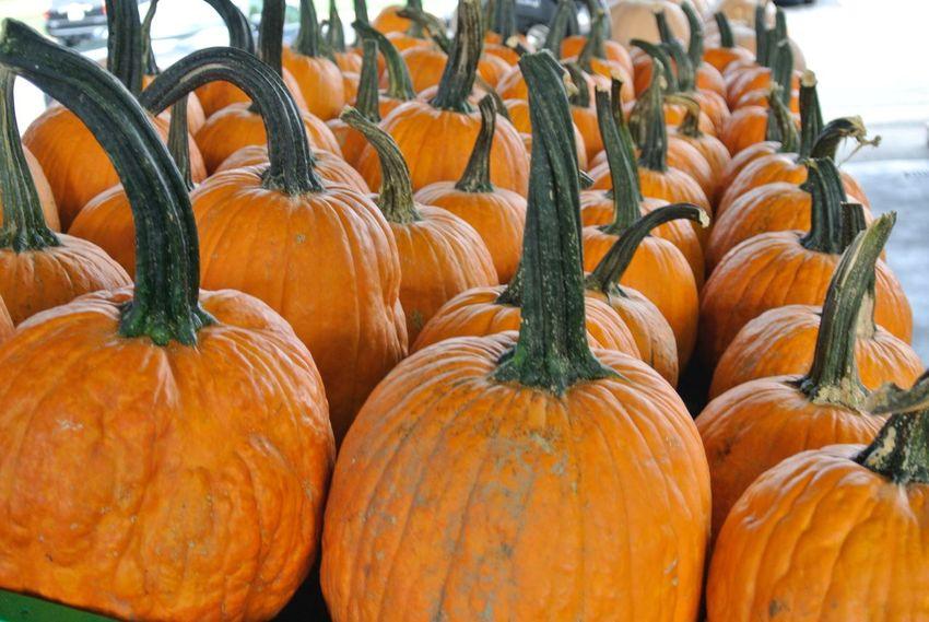Pumpkin pumpkin Food And Drink Food Orange Color Healthy Eating Pumpkin Wellbeing Vegetable Retail  Freshness Market Stall Market For Sale Abundance Large Group Of Objects Still Life No People Agriculture Fruit Day Arrangement
