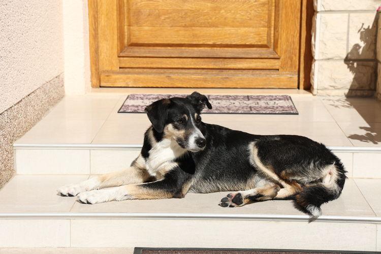 Dog resting on tiled floor