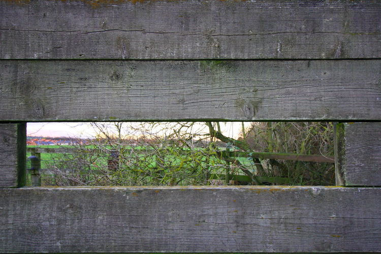 Peek A BOO Pattern Textured  Full Frame Green Color Wood Fence Boundary Barrier Plank Built Structure Close-up Architecture Wall - Building Feature Growth Outdoors Day Plant Wood - Material No People Nature Grass