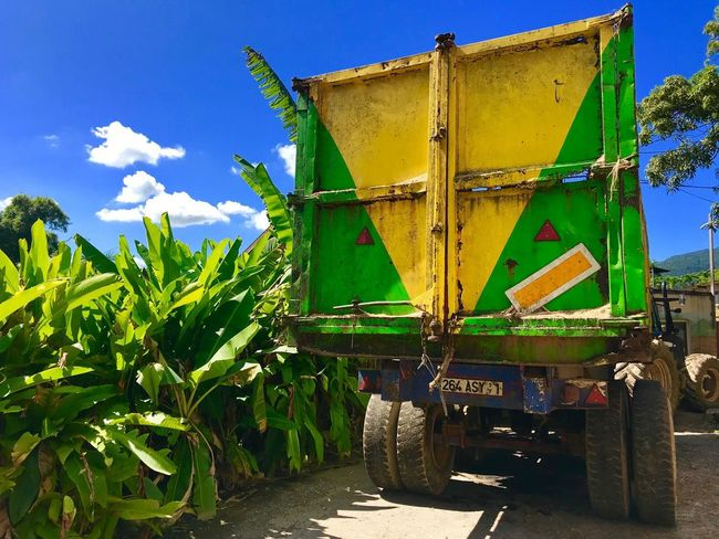 Banana Plantation Rum Distillery Tropical Caribbean Agriculture Guadeloupe Yellow Color Yellow And Green Jamaican Flag Truck Blue Sky White Clouds West Indies