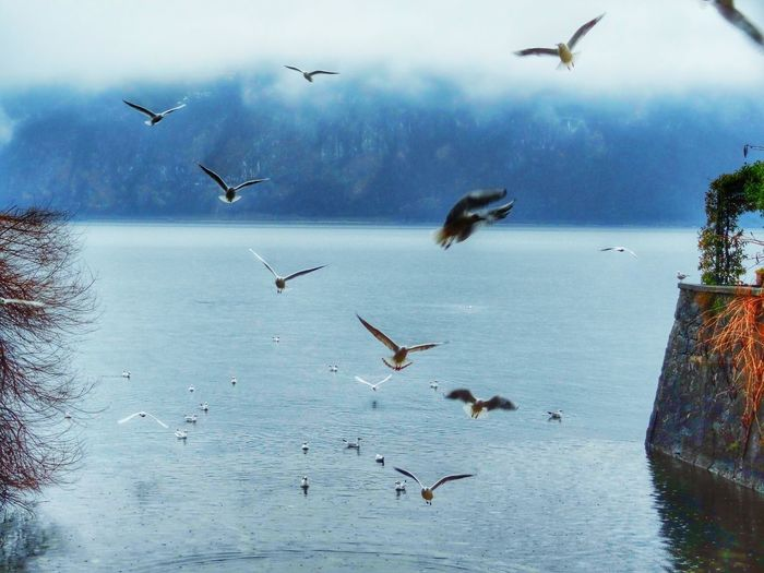 Flock of seagulls flying in sky