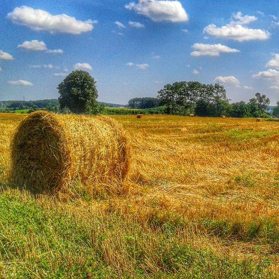 Landscape Poland Kaszuby Countryside