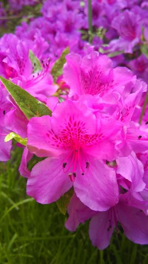 Flowers, Nature And Beauty Flowers Nature Beauty In Nature Close-up Colorful Pink Flower Pink Macro Trees