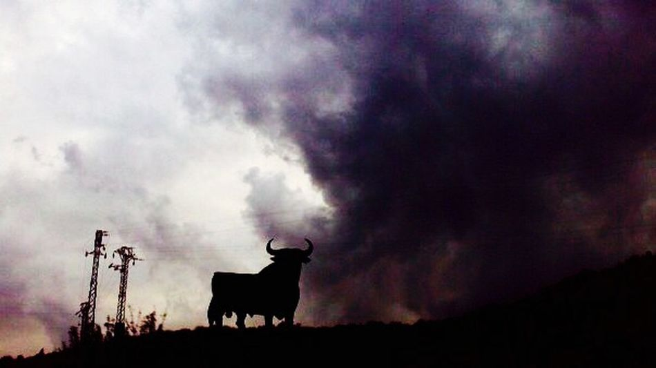 (C) Alexander Eger SPAIN Spanien Silhouette Cloudporn Bull Taurus STIER Dramatic Sky IPhoneography TakeoverContrast Taken By Me No People Dark Clouds Magic