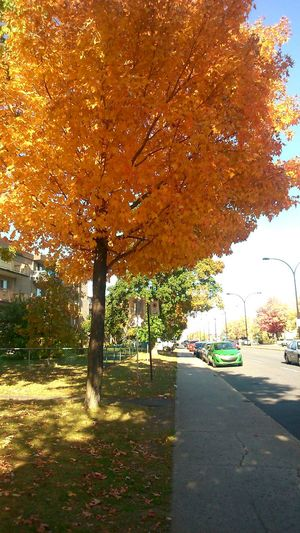 Fall 2014 . Fall Beauty Orange Nature Awesome Leaves Montreal, Canada Enjoying Life Natural Beauty Discovering