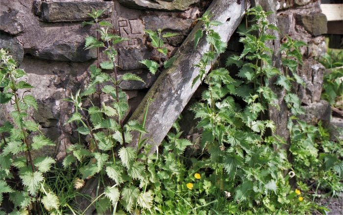 Builder's graffiti amid the nettles on a drystone wall next to the Rochdale Canal Canal Towpath Graffiti Hidden Gems Lancashire Nettles Rochdale Rural Wall Canal Canals And Waterways Close-up Drystonewall Green Color Growth Leaf Nature Plant Rochdale Canal Rural Scene Wild Flowers