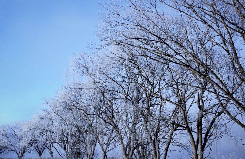 Ascending Frost