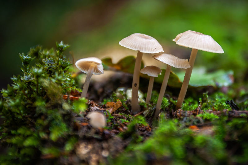 mushrooms Beauty In Nature Close-up Edible Mushroom Field Food Food And Drink Forest Fragility Freshness Fungus Growth Land Mushroom Nature No People Outdoors Plant Selective Focus Surface Level Toadstool Vegetable Vulnerability