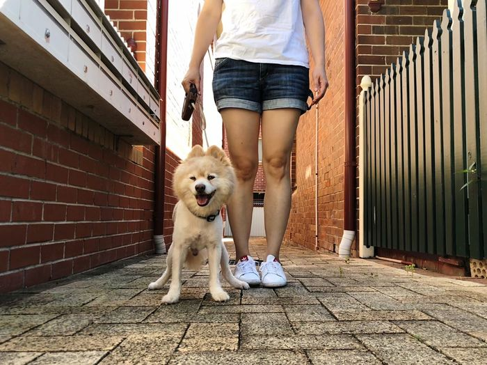 Low Section Of Woman With Dog Standing On Footpath