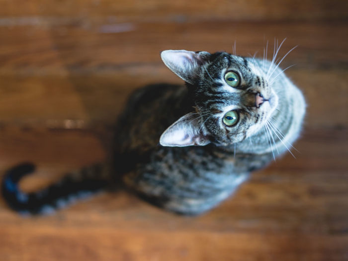 Directly Above Portrait Of Cat On Table