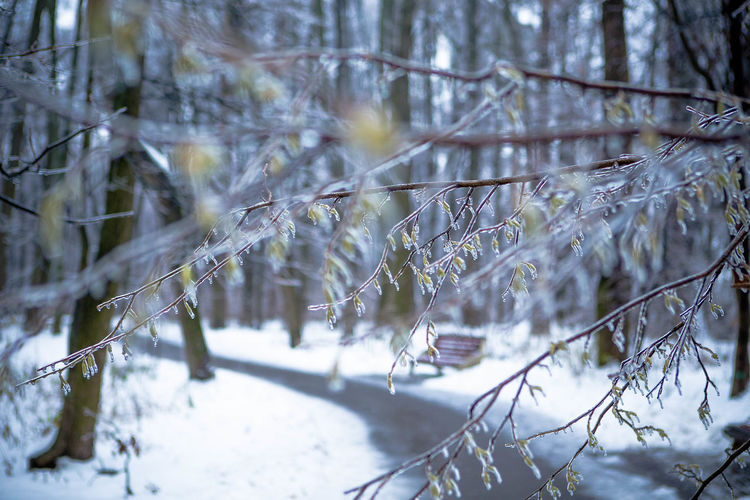 'I won't freeze you out, my heart is melting...' Branch Close-up Forest Freeze Nature No People Outdoors Winter