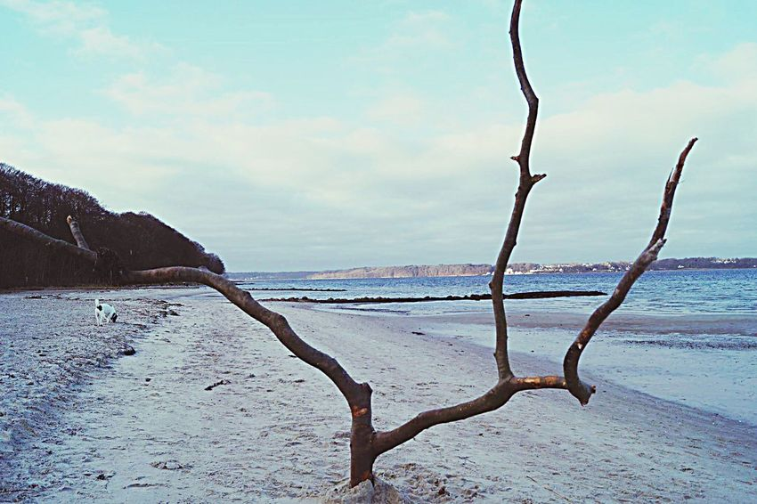 A horn is growing out of the sand Sea Beach Nature Sky Sand Tranquil Scene Scenics Beauty In Nature Horizon Over Water Cloud - Sky Flensburg Gluecksburg Strandhotel Dog Dead Tree Horn Sculpture Art Photography Art No People Tree Growing Tree Glücksburg