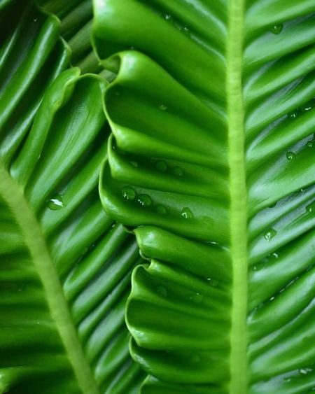 Green Color Nature Leaf Freshness Close-up No People Full Frame Growth Plant Day Outdoors Beauty In Nature Drops Of Water My Garden @my Home