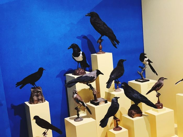 Flock of birds perching on the wall