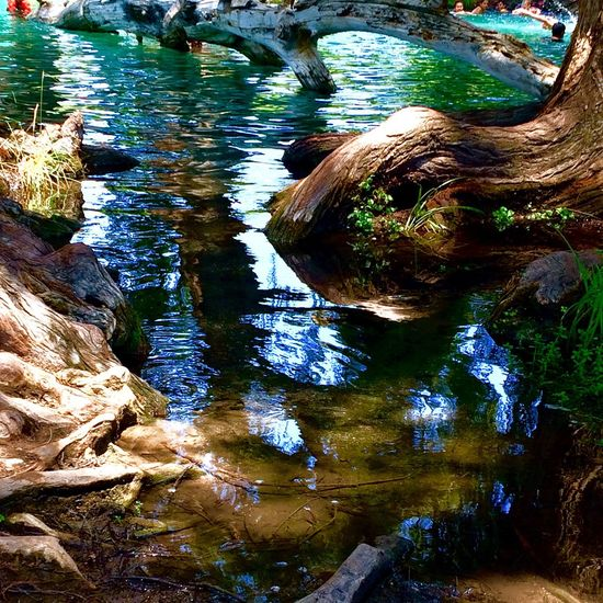 Pozas los Ahuehuetes. 😊 Water Reflection Nature Tranquility Tree Trunk Tranquil Scene Beauty In Nature Beautiful Traveling Puebla Pozas EyeEm Best Shots EyeEm Nature Lover Eye4photography