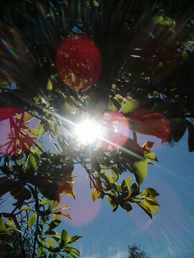 Lovely Weather Lovely Day Paradise On Earth Colorful Love To Take Photos ❤ Nature Photography Summer ☀ Nature My Photography Springtime Pretty♡ Warm Colors Sunshine Sunsetlover Sky Plants 🌱 Vladimir Marie Hasenglück